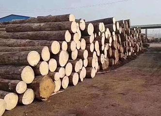 全球多产地停工锁国,木材价格暴涨30%,将引发相关行业涨价?乐器类也在其中!