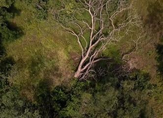 「滴血」的玫瑰木:西非玫瑰(红)木走私和生态灾难調查